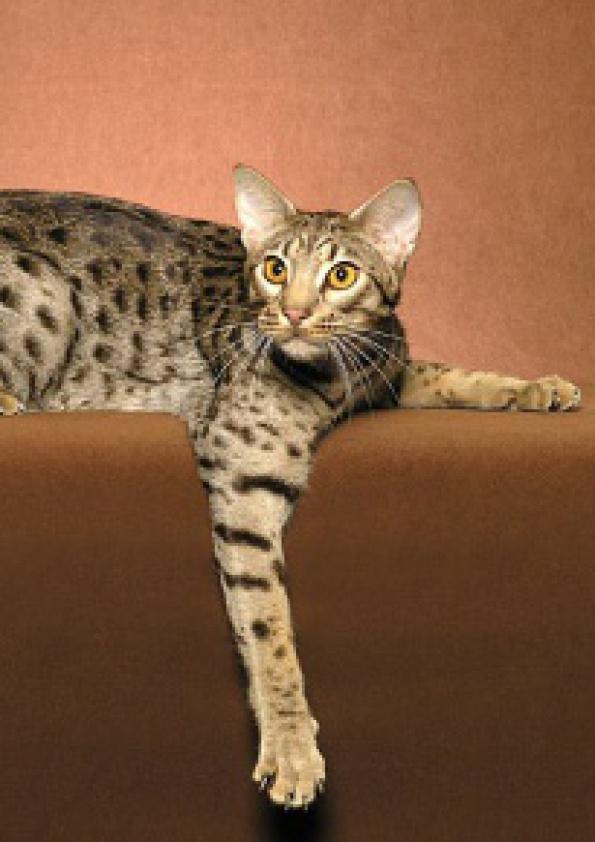 Medzinárodná výstava mačiek  c453342a095